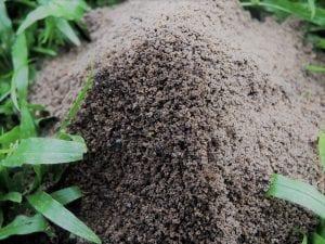 Best Ant Killer Bait