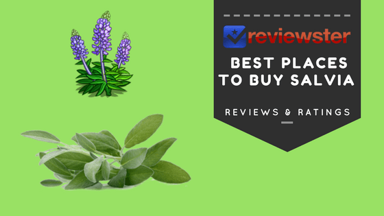 Best Places To Buy Salvia Extract Online - Sage Of The