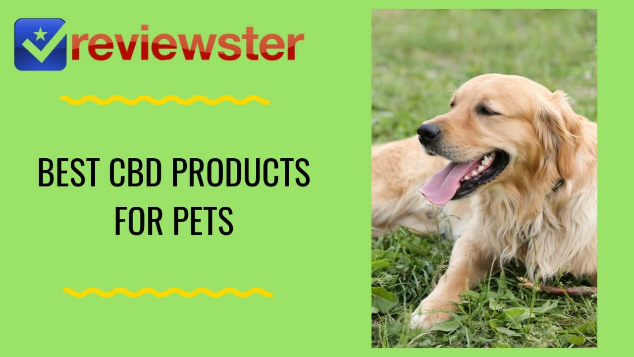 Best CBD For Pets – Buy CBD For Dogs & Cats