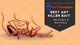 Best Ant Killer Bait – ( Top 10 Review Roundup )