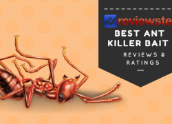 Best Ant Killer Bait – ( Top 10 Review Roundup )