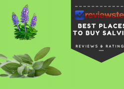 Best Places To Buy Salvia Extract Online – Sage Of The Diviners Review