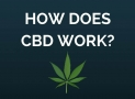 What Is CBD and How Does It Work? The Main Benefits Of Using CBD